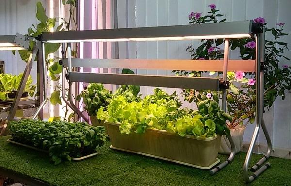 Искусственное освещение для комнатных растений и рассады